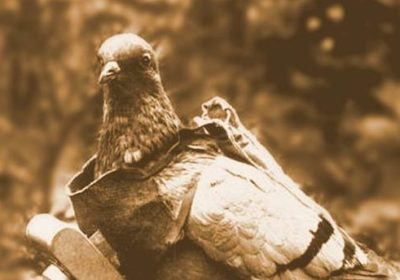 German Avian Intelligence - Pigeons started to go high-tech in WWI